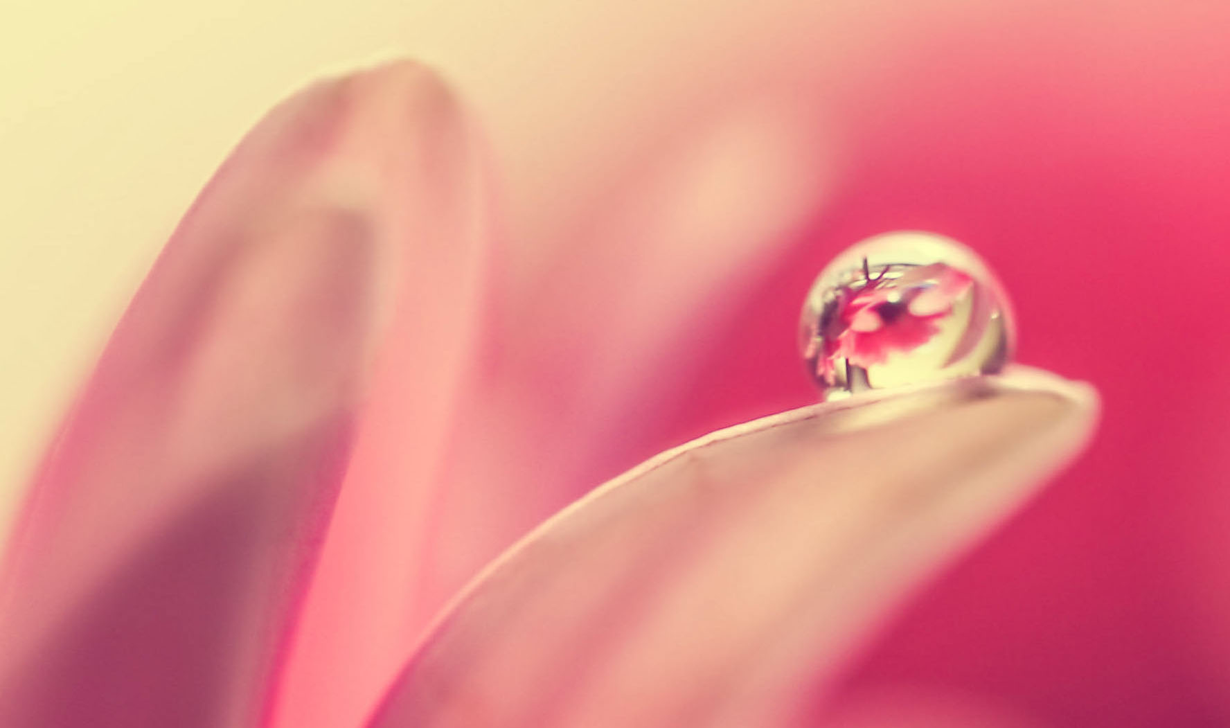 Flower droplet - event type