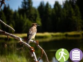 Migratory Bird Walk